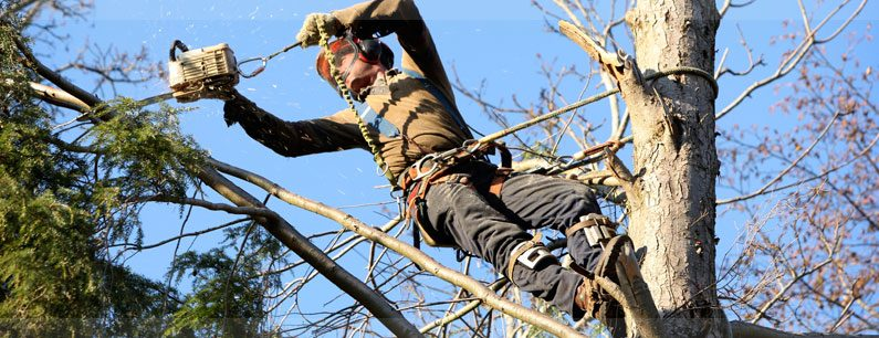 Let Your Yard Be its Best Self with Expert Tree Services Today
